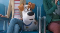 The Secret Life of Pets 2 Animation Movie New Trailer: Watch