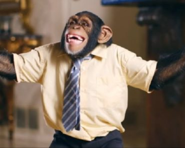 The Offspring Releases New Music Video Featuring….Chimpanzees?